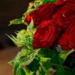 Les roses rouge d'Aphrodite