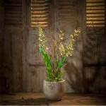 bouquet-d-orchidees-jaunes-et-noires.jpg