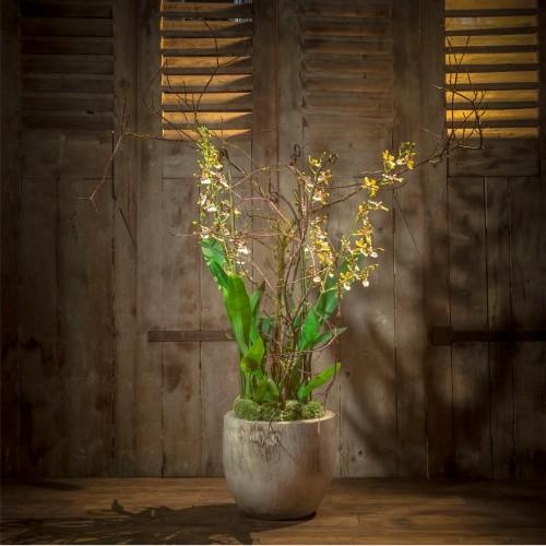 livraison d 39 orchid es haut de gamme domicile arachn. Black Bedroom Furniture Sets. Home Design Ideas