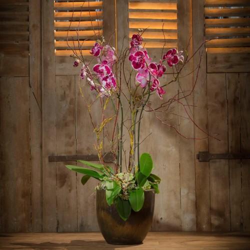 Orchis-bouquet-d-orchidees-violette-blanche