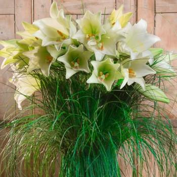 Hera-bouquet-de-lys-blancs.jpg