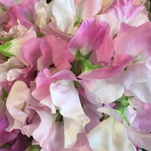 Bouquet de fleurs - pois de senteur