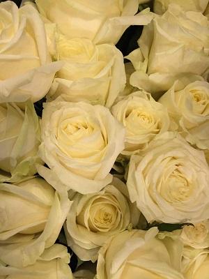 Bouquet de fleurs - rose blanche