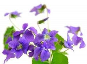Bouquet de fleurs - violette