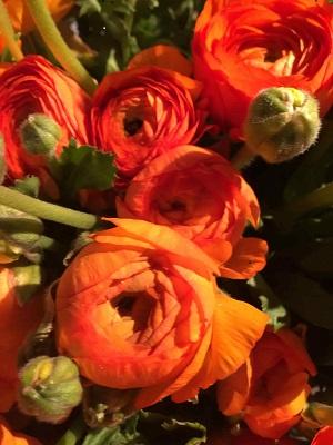 Bouquet de fleurs - renoncule